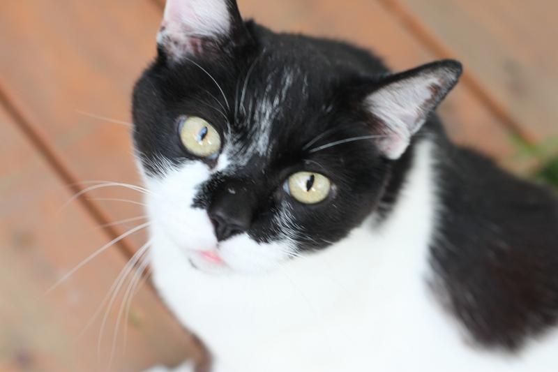 Jo-JO kitty